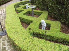 A common feature: Clipped boxwoods and small hedges with meandering paths.