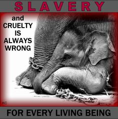 "DO NOT SUPPORT THE CIRCUS   ... or any other ANIMAL ""entertainment""."