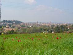 tulipani selvatici su Cesena