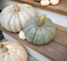 Growing unique pumpkin varieties in Surrey BC at our garden center for the fall season! Beautiful autumn harvest squash and pumpkins. Amazing Gardens, Beautiful Gardens, Pumpkin Varieties, Pumpkin Patches, Pumpkin Farm, Rustic Fall Decor, Garden Planner, Landscaping Software, Outdoor Planters