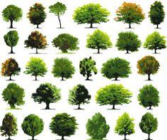 Trees Vector Graphics Set