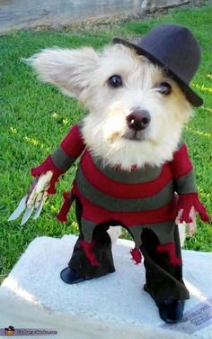 21 dogs who already have better Halloween costumes than you do.