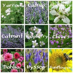 Be bee-friendly this summer. Bee friendly blooms for the garden.
