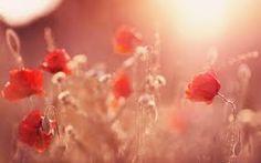 """Képtalálat a következőre: """"spring flowers"""""""