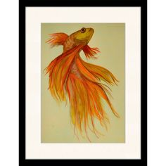 Exotic Fish Framed Art Print