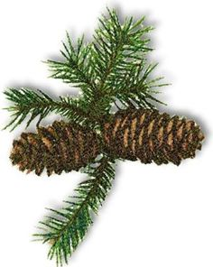 Advanced Embroidery Designs - Pine Cones