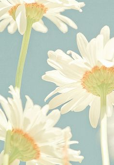 """Daisies have always been one of my favorite flowers, and my favorite color is blue. When I went away to college, my Mom wrote to me, and always put 3 daisies on the return address. This was a code for """"I Love You"""". This picture of three daisies on blue really takes me back!"""