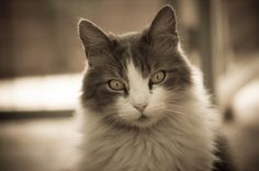 Portret van een kat.  Portrait of a cat.