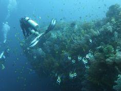 Diving Philippines: Sabang, Puerto Galera, Mindoro oder doch eher Boracay Island?