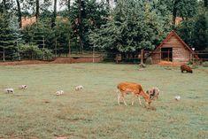 svadobná fotografka z Bratislavy - hmfoto.art - Sisi & Kubo Kangaroo, Animals, Art, Baby Bjorn, Art Background, Animales, Animaux, Kunst, Animal