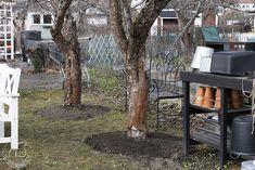 Oravankesäpesä: OMENAPUIDEN YMPÄRYKSEN KANTTAUS. Trunks, Plants, Drift Wood, Flora, Plant, Planting