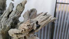 http://www.im-bonsai.hu/images/nagy-tonk-201701/IMG_20170107_140006.jpg