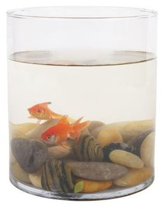 It's possible to keep a goldfish in a bowl, but they shouldn't be kept in one. A bowl is too damned small for a goldfish. If you want you goldfish to be happy, give the poor thing a proper tank, and not plop him into a tiny tank for 'decoration'. Baby Goldfish, Goldfish Care, Goldfish Pond, Freshwater Aquarium, Aquarium Fish, Fish Aquariums, Plastic Fish Tank, Small Fish Tanks, Pet Fish