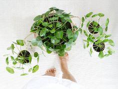 Urban Jungle Bloggers - Plantselfie by @mammilade