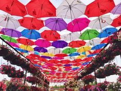 Things To Do In Dubai: Visit The Dubai Miracle Garden - pinay flying high