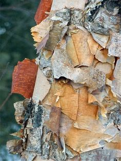 birch bark  the beauty of nature... all perfect together....  blogspot is fun!  you can feed her fish!