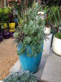 Succulents in a tall pot might work in the pool area or entry.