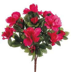 """13"""" Azalea Bush x7 Beauty (Pack of 36) * Be sure to check out this awesome product."""