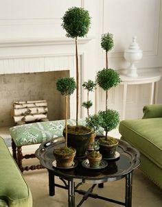 indoor topiary