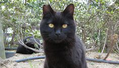 10 Reasons Black Cats Are AWESOME!