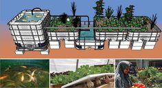 Osmose – ferme aquaponique – L'agriculture 2.0 : Produire plus, mieux, et avec moins.