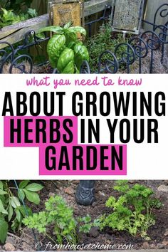 GREAT ideas for an outdoor herbs garden. I love the tips on which ones should be planted in containers, especially since I only have a small space on my patio that gets sun. #fromhousetohome #gardeningtips #gardenideas  #herbs