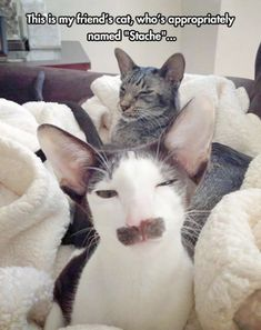 Ahhh > Funny Cat Photos :)