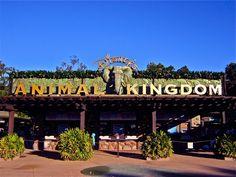 Animal Kingdom, Disney - For Disney travel quotes, contact Amie@GatewayToMagic.com