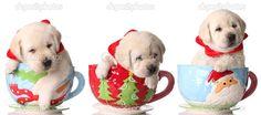 depositphotos_11106128-Christmas-puppies.jpg (1023×453)