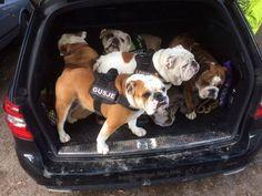Baggy Bulldogs - Baggy Bulldogs's Photos