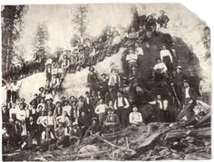 Over 100 people stand with a logged giant sequoia tree in California, 1917 Giant Sequoia Trees, Giant Tree, Big Tree, Old Pictures, Old Photos, Rare Photos, Bonsai, Sequoiadendron Giganteum, Nature Photography
