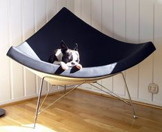 35 ideas for baby face nelson boston terriers George Nelson, Baby Face Nelson, Baby Boy Quilt Patterns, Baby Room Closet, Baby Bump Pictures, Puppies And Kitties, Doggies, Cute Friends, Butterfly Chair