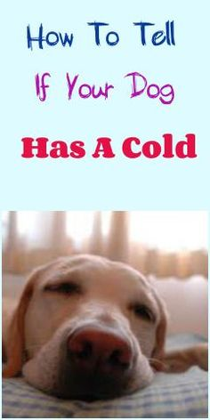 How To Tell If Your Dog Has A Cold...see more at PetsLady.com -The FUN site for Animal Lovers