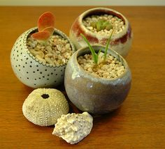 more succulent pinch-pots