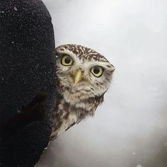This owl is adorable!