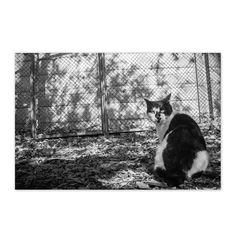 Tenjin March 2014 #cat #blackandwhitephotography