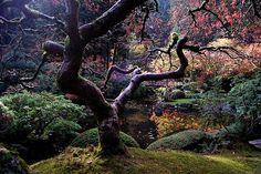 Japanese Maple at Portland Japanese #Garden