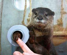 Shake Hands With An Otter At Japan's Keikyu Aburatsubo Marine Park