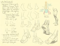 Lower extremity notes and studies from Hampton's figure drawing book. Photoshop CS6, Intuos 5 with art pen.