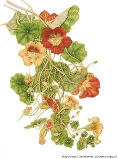 Картинки для творчества. Цветы.. Обсуждение на LiveInternet - Российский Сервис…