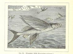 Image taken from page 150 of '[Nach Ecuador. Reisebilder ... Zweite, vermehrte Auflage. Mit ... Holzschnitten, etc.]' | Flickr - Photo Shari...