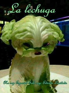 Lettuce Puppy Will Make You Swear Off Vegetables - Food Carving Ideas Veggie Art, Fruit And Vegetable Carving, Veggie Food, Cute Food, Good Food, Awesome Food, Food Sculpture, Creative Food Art, Food Carving