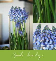 "Blue pearl flowers in vase. The text in Norwegian: ""God helg"" can be translated into: Happy weekend!"