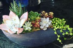 Really hate to play favorites but 😍  #rooteddallas #dallassucculents…