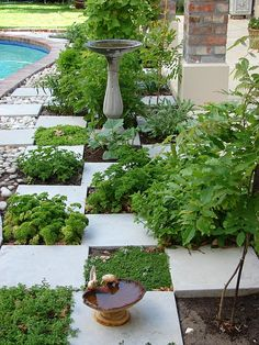 do this with flagstone (less formal for Benjamin's Bird Garden)  Creeping Thyme, other tough groundcovers