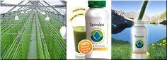 Spirulina Drink! #Spiralps #Spirulina  http://www.algaeindustrymagazine.com www.spiralps.ch