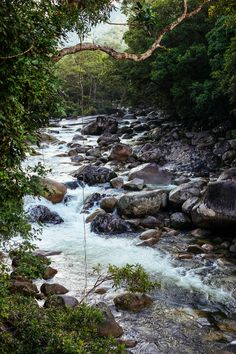 Through The Daintree Wilderness, Queensland, Australia — Nadya's Side Of The Road