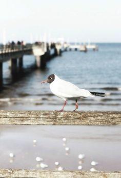 Mit Smeti Herz und Seele auftanken - auf Usedom   SoLebIch.de #reisen #urlaub #fotografie Foto: smeti