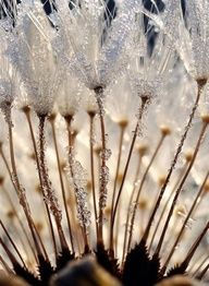 Icy morning...