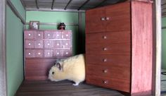In Japan, A Miniature 'Ninja Mansion' Made Specially For A Hamster - DesignTAXI.com